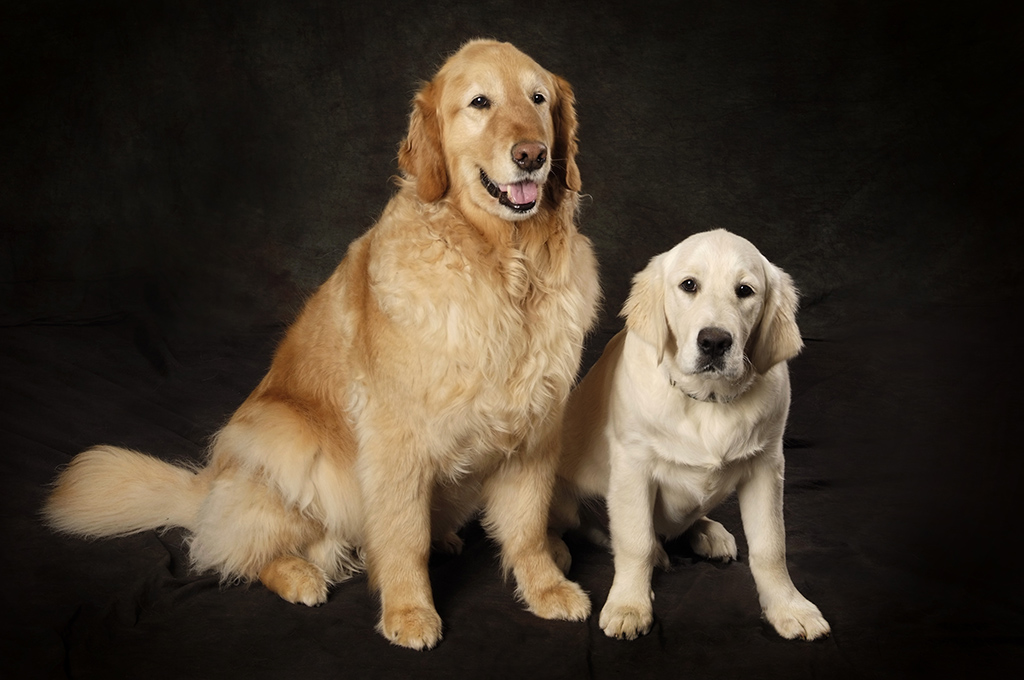 studio-dog-pet-photography.jpg